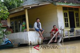 Banjir rendam 8.940 hektare sawah Lampung Timur