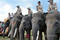 Gajah jinak Agam-Kartijah Semarakkan Kirab Asian Games