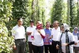 Bupati: Festival Petik Lada tingkatkan agrowisata