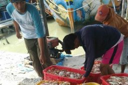 Rajungan Lampung Timur andalan ekspor nasional