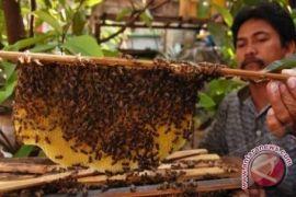 Bengkulu produksi madu hutan 1,5 ton