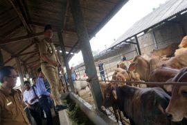 Bupati Lampung Tengah Resmikan Kampung Ternak