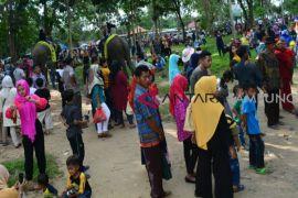 20 ribu pengunjung padati Pusat Pelatihan Gajah Way Kambas