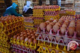Kelangkaan pakan sebabkan kenaikan harga telur