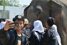 Gajah dan badak tetap jadi ikon Festival Waykambas
