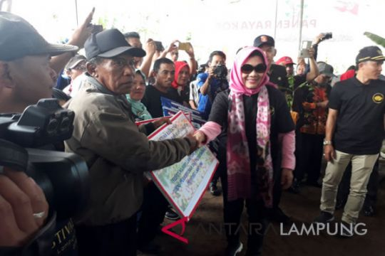 Pemprov Lampung bantu peremajaan tanaman kopi