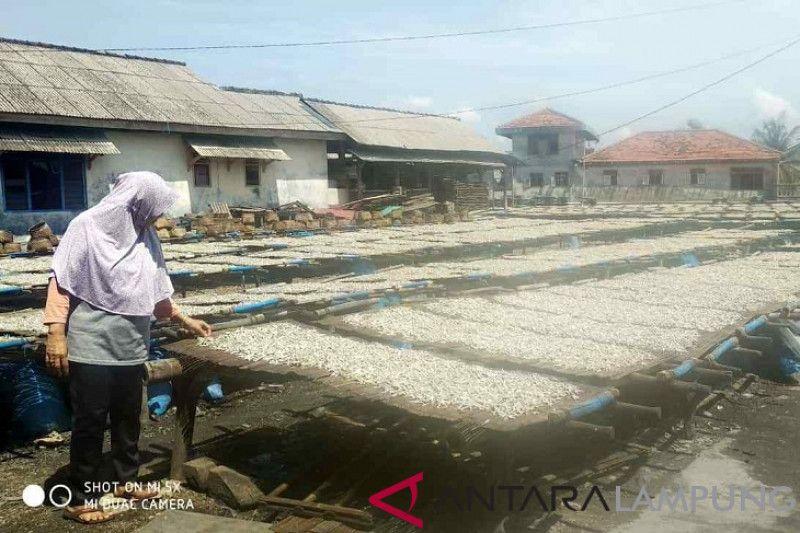 Warga Pulau Pasaran Mulai Produksi Teri Asin Pascatsunami