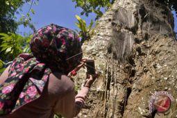 Kuburan tua Toraja