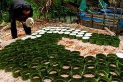 Produksi Tepung Sagu