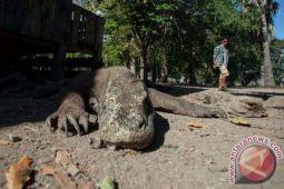 TNK : Angin kencang landa Kawasan wisata Komodo