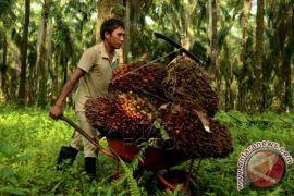 Indonesia Incorporated untuk Lawan Hambatan Sawit dari Negara Maju