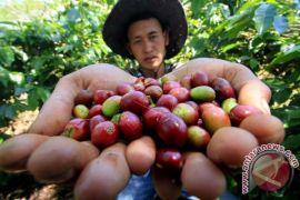 Pemprov Sulsel rancang proyek percontohan hilirisasi kopi