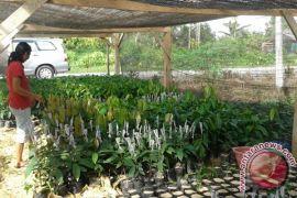 Mars Fokus Bina Petani Kakao Tiga Provinsi