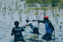 Polsek Sendana tanam mangrove cegah abrasi