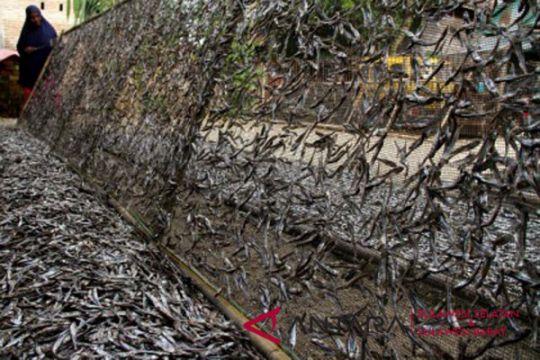 Produksi ikan teri