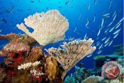 Puluhan Penyelam Sulut Bersihkan Pantai Transplantasi Coral