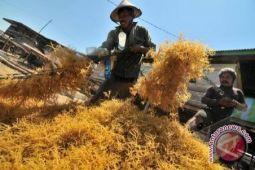 Minut targetkan rumput laut meningkat 50 persen