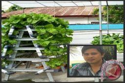 Urban farming hidroponik solusi hijau kota padat