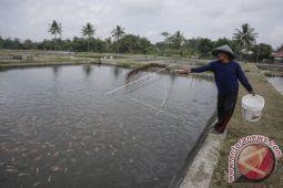 Kelompok Pembudidaya Ikan Dapat Bantuan Pemkab Mitra
