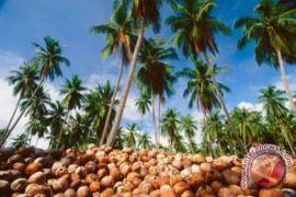 Kementan tingkatkan pasar ekspor komoditas kelapa