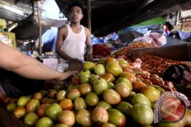Harga tomat di Manado naik 10 persen