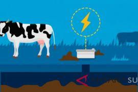 Manado Resmi kembangkan energi sapi menjadi listrik