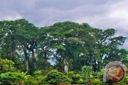 Legislator ajak milenial peduli hutan pulau sumbawa