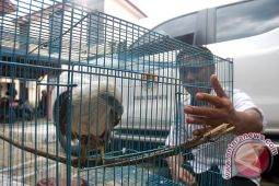 Ribuan Ekor Burung NTB akan Diselundupkan ke Bali