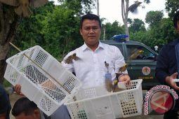 BKSDA NTB Melepasliarkan Burung di TWA Gunung Tunak