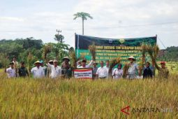 BKP pastikan harga gabah di Lombok tinggi