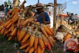 NTB butuh SDM untuk mengembangkan industri jagung