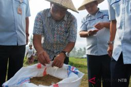 Bulog: petani wajib menjual gabah ke pemerintah
