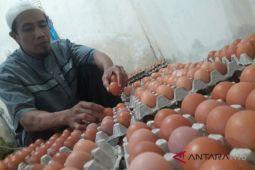 POLDA NTB pantau lonjakan harga telur