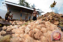 Petani korban gempa keluhkan harga kelapa anjlok
