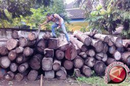 Miris hutan di Bima sudah gundul