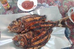 Sajian ikan kakap bakar di Pantai Nipah