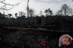 Hutan di Dompu rusak parah