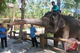 Taman Gajah