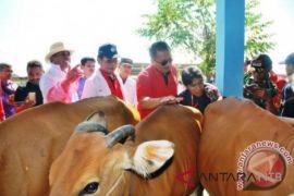Program upsus siwab sasar ratusan sapi