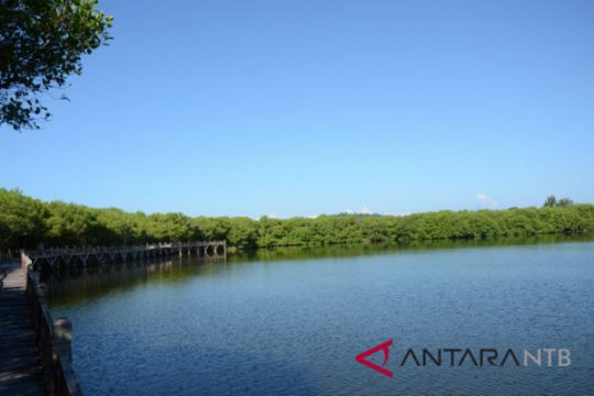 Menikmati pesona danau hutan mangrove Gili Meno
