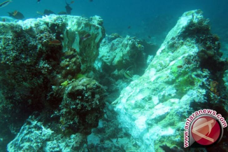 Gili Sulat, Gili Lawang Coral Reefs In Alarming State: WCS