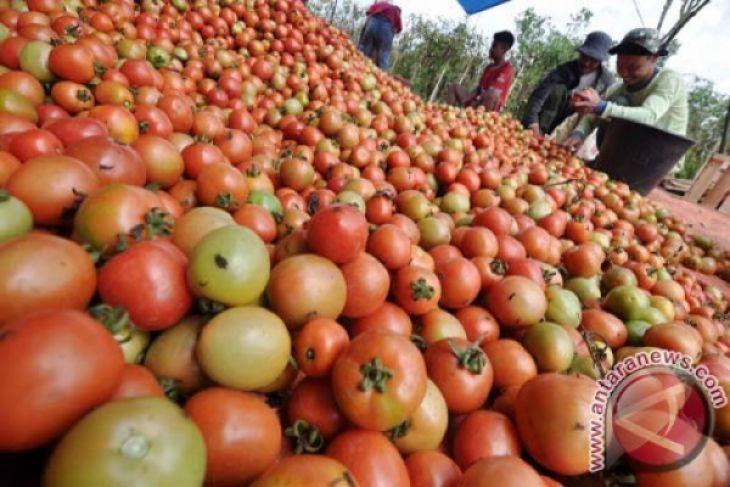 Sari buah tomat bisa jadi bahan membuat baterai