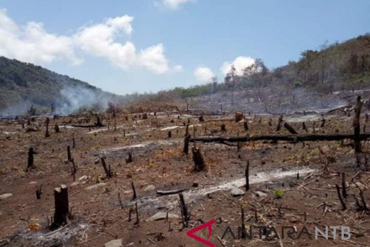 Artikel - Mirisnya nasib hutan di Pulau Sumbawa