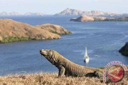 Wisata Komodo jadi sumber devisa tertinggi