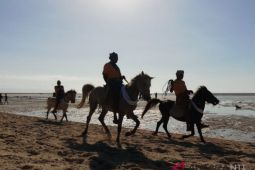 Populasi kuda Sandelwood tinggal 30.000 ekor