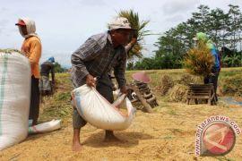 Beban NTT dalam memenuhi kebutuhan pangan