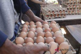 Harga telur ayam sudah tembus Rp60.000/rak