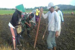 TNI Koramil Nimboran bantu petani tanam padi