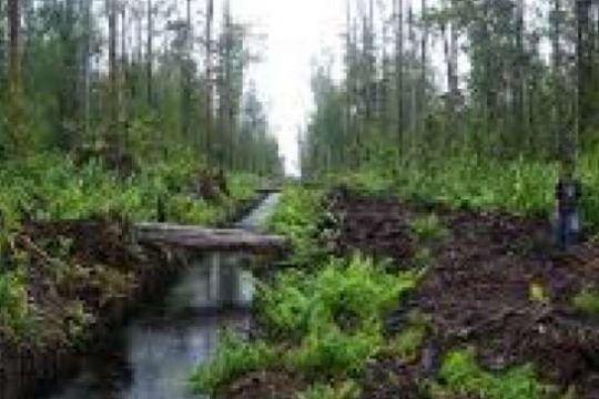 Aktivis Lingkungan Minta BRG Berani Intervensi Korporasi