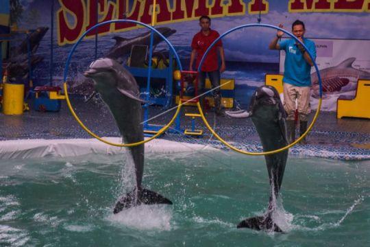 (Foto) Sirkus Lumba-lumba Keliling